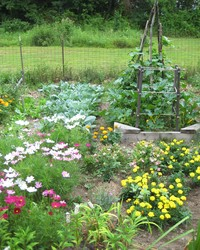 Organic Gardening 101: How to Start a Garden and Keep It Healthy