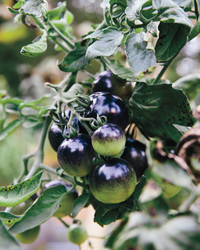 Frances Palmer's Favorite Edibles for Growing and Arranging