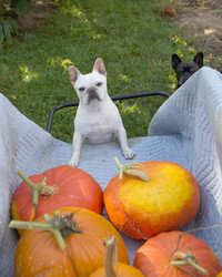 Pumpkin Picking with Francesca and Sharkey