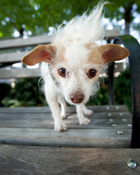 Your Pet's Golden Years: Five Questions for the Founder of Susie's Senior Dogs