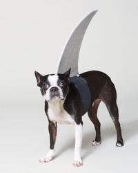 Playful Pet Halloween Costumes to Buy or DIY