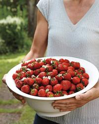 strawberries-i0c6610r-md109179.jpg