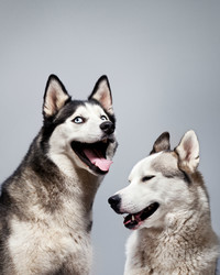 Men or Women: Who Understands Their Dogs Better?