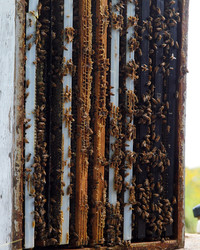 Hive Mentality: Five Beekeeping Tips from Kara Brook