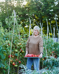 Martha's Guide to Preserving Tomatoes