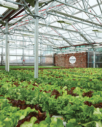 Gotham Greens: Taking Salad to New Heights