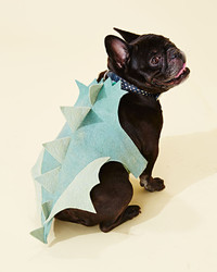 Turn Your Dog into an Adorable Baby Dragon for Halloween