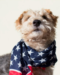 Is Your Pet Scared of Fireworks? Our Veterinarian Has 5 Tips For You