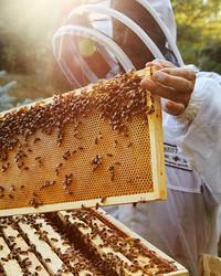 Buzzworthy: Meet the Man Saving Bees