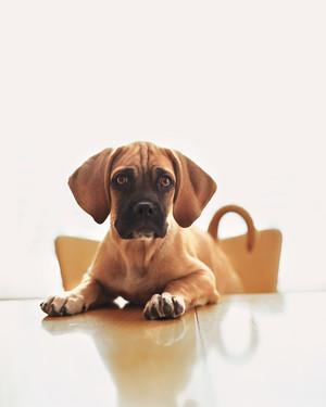 Easy Fixes to Common Dog Behavior Problems