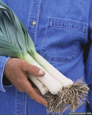 Leek Recipes