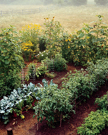 Succession Planting Guide