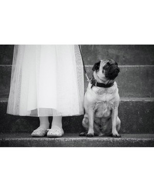 Wedding Pet Contest