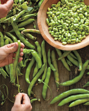 Fava Bean Recipes