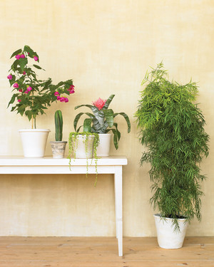 Moving Tips for Transporting Your Houseplants Safely