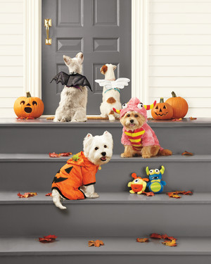 Pet Safety Tips for Halloween