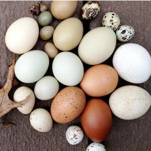 Always Prepare Eggs by Dipping them in Vinegar