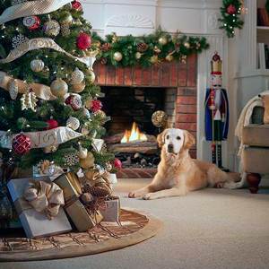 Tips for a Pet-Friendly Tree