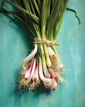 Spring Onions (and chives and garlic)