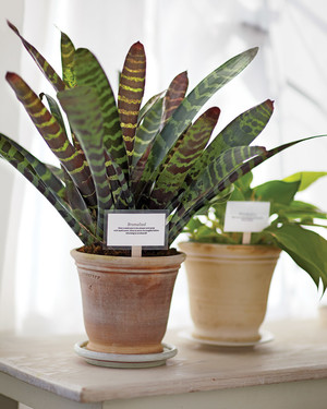 10 Ways You Might Be Killing Your Houseplant