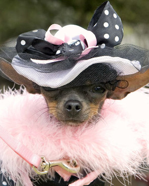 Halloween Pet Contest 2009