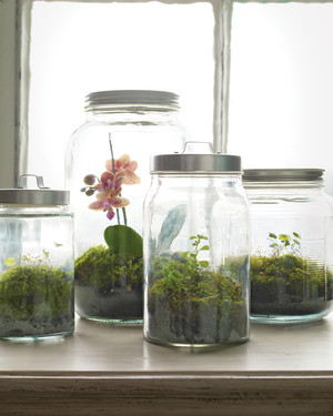 A Growing Obsession: Crafting with Moss