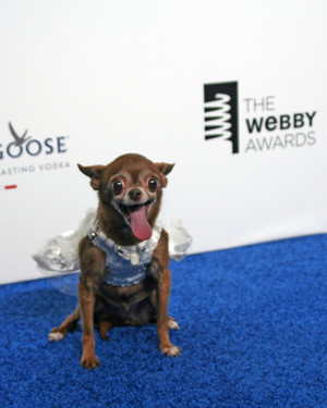 Chloe Kardoggian: Martha Stewart Pets Canine Correspondent at the 19th Annual Webby Awards