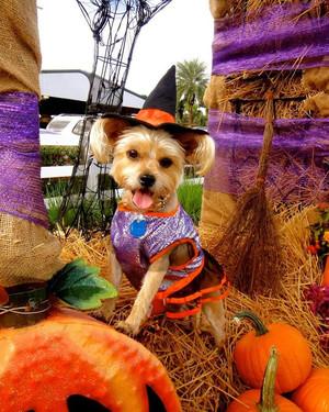 Halloween Pet Contest 2013