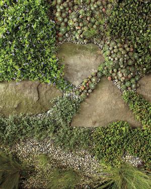Outdoor Pathway Perennials