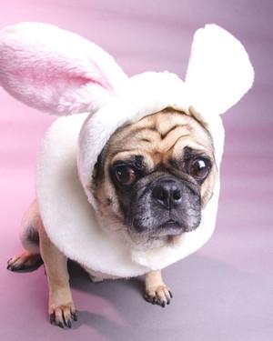 Easter Pet Photos
