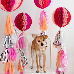 Martha Stewart Pets ® Bow Stitch Adjustable Dog Collar