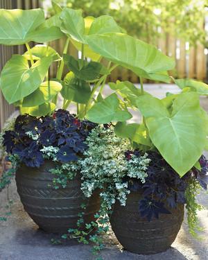 A Garden in Every Pot