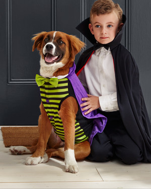 matching owner and dog costumes for a pet rifyingly cute halloween martha stewart. Black Bedroom Furniture Sets. Home Design Ideas