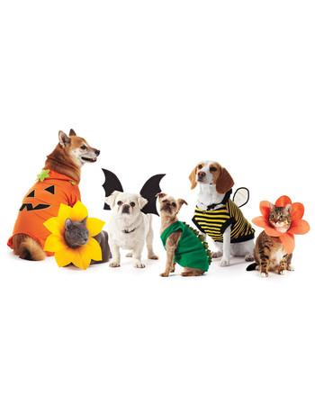 pet-costumes-1011mld107618.jpg