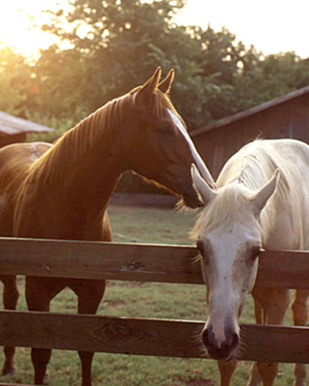 mla_horses.jpg