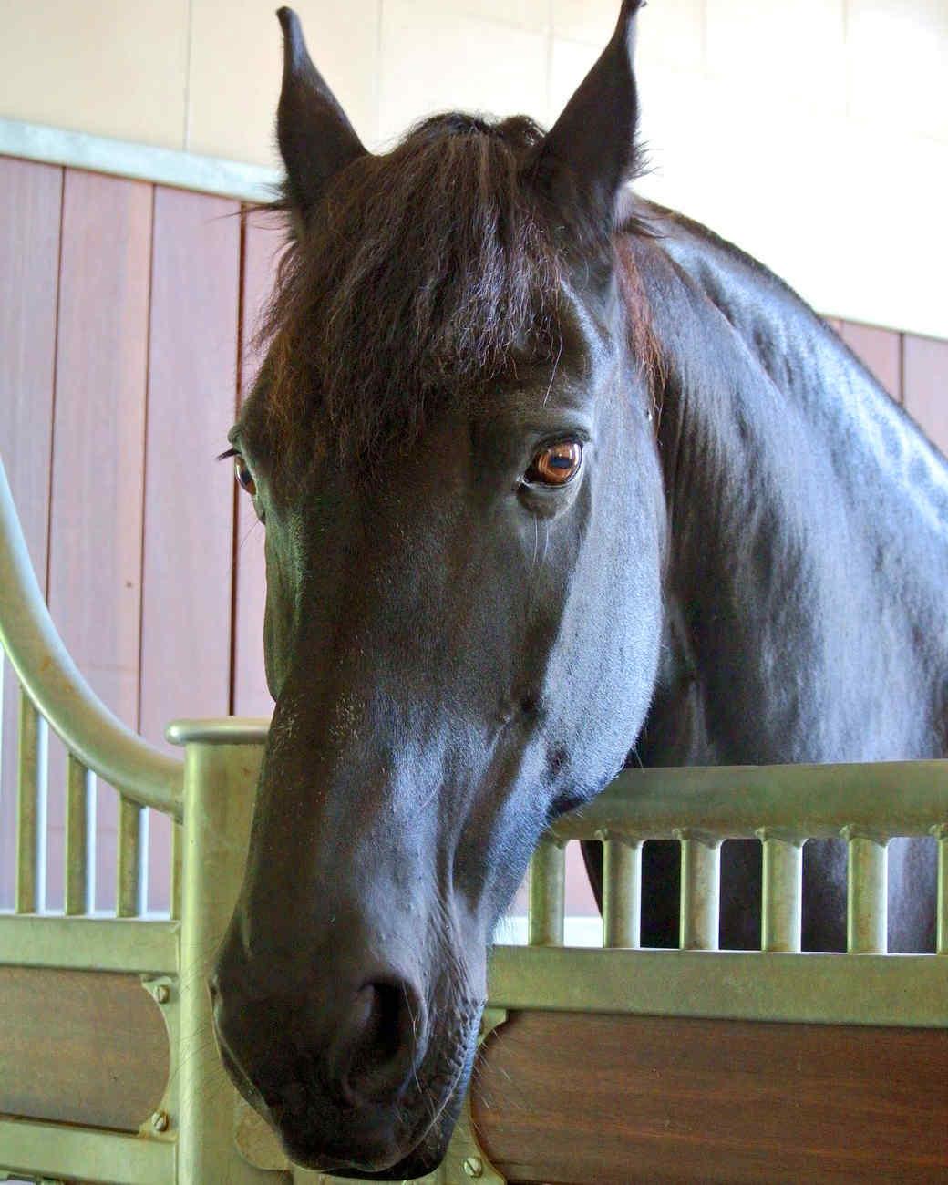 horse-hay-23.jpg