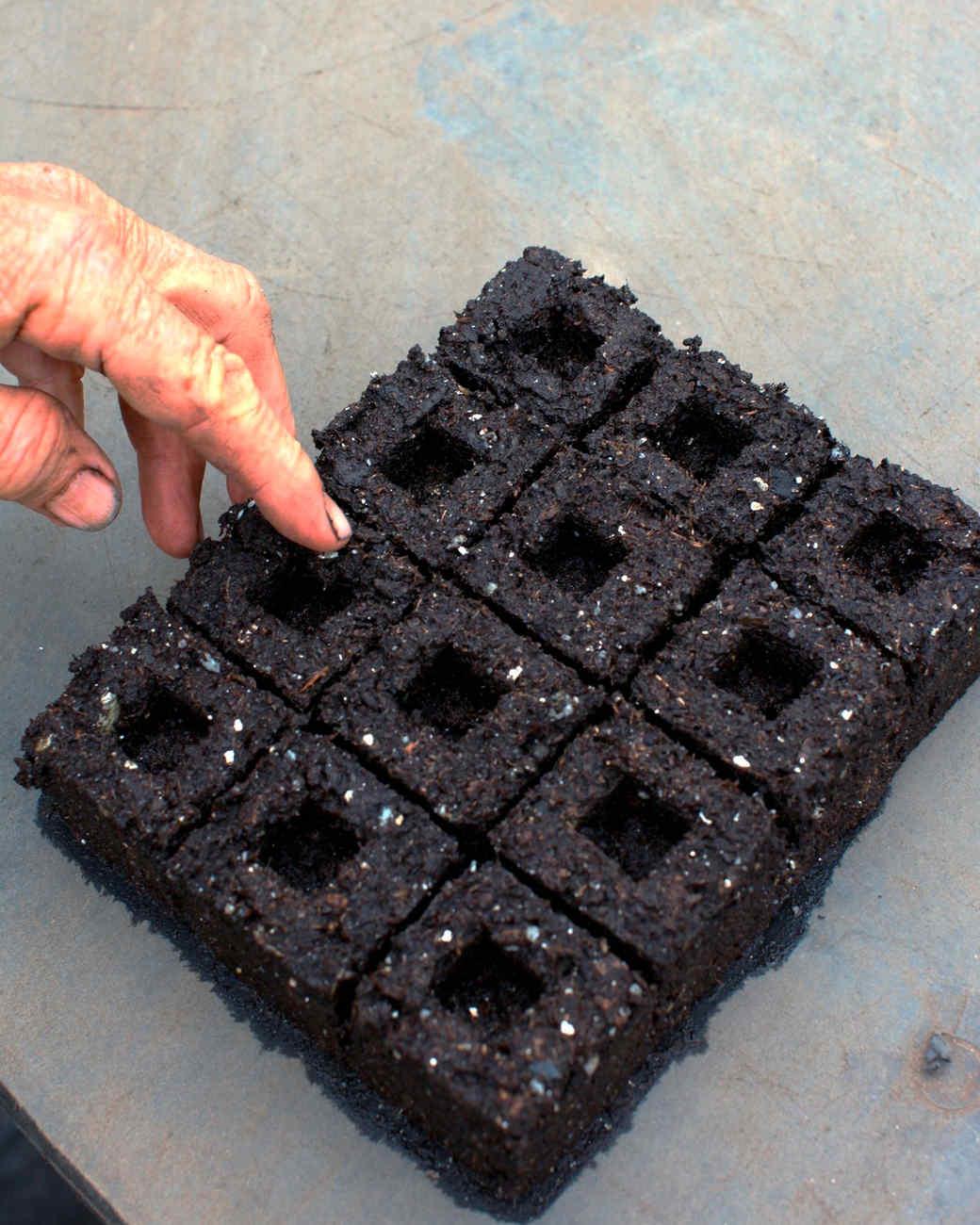 seed-blocks3.jpg