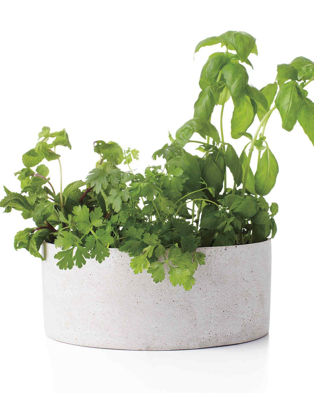 herbs-med108679.jpg