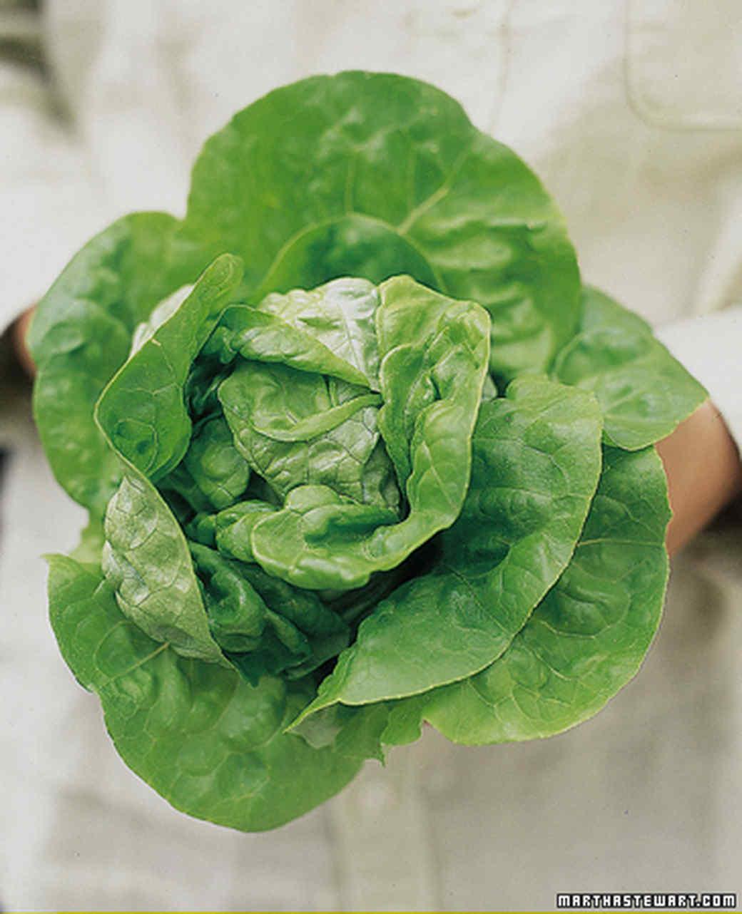 Salad Greens Growing Guide