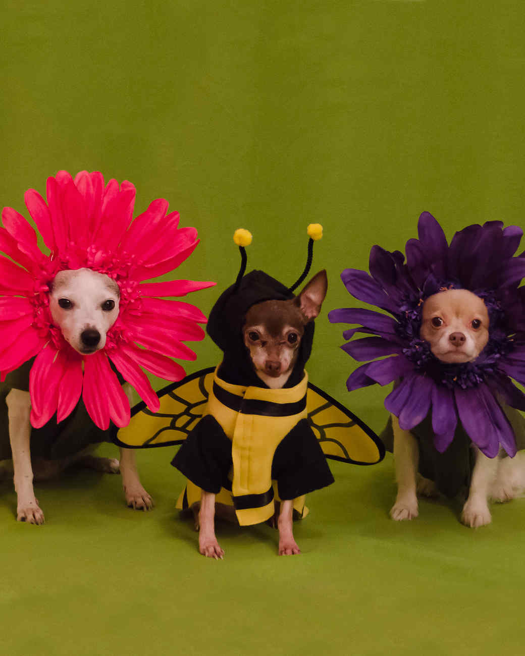 flower-dogs-1014.jpg