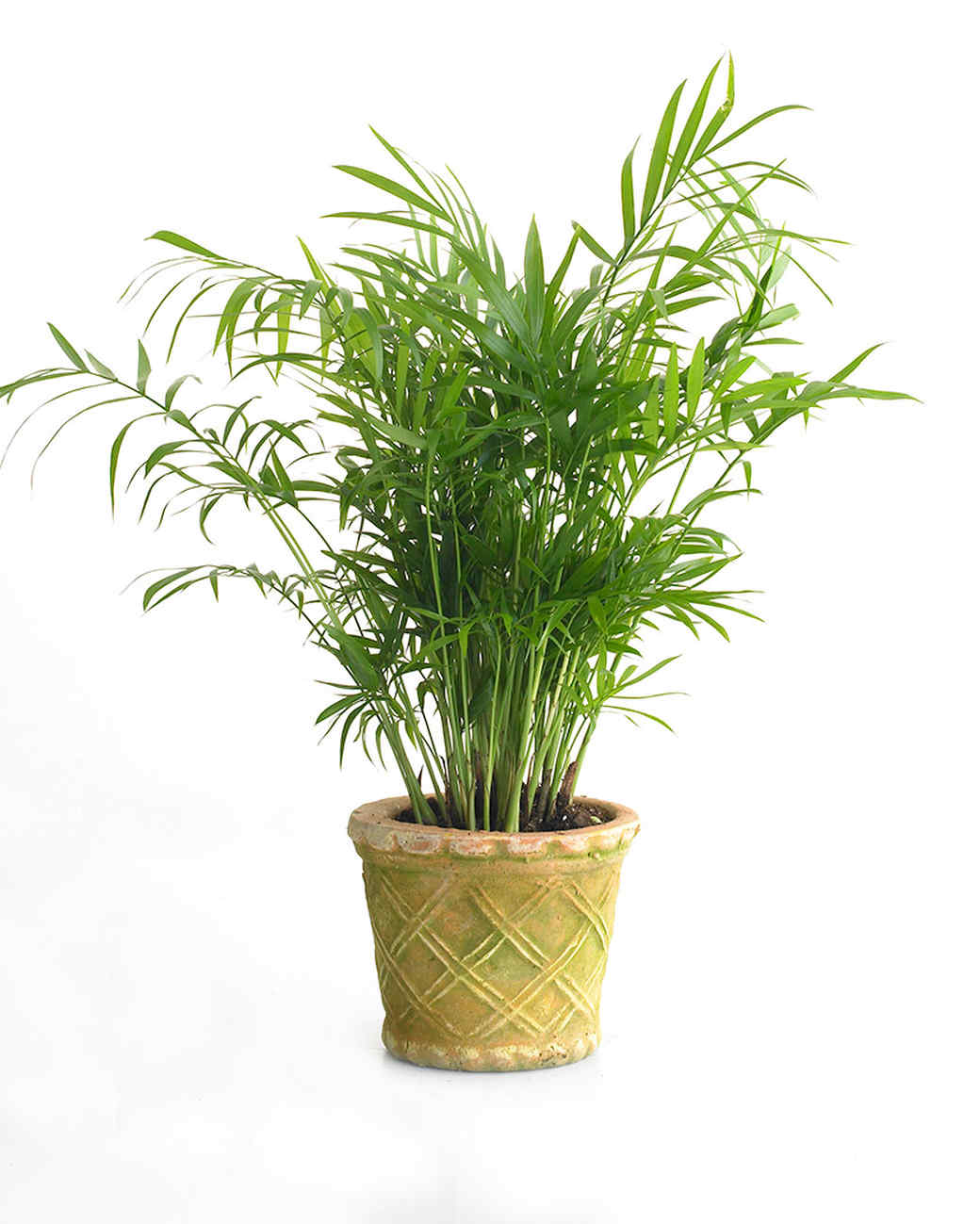 low light hanging plants best 25 house plants ideas on pinte