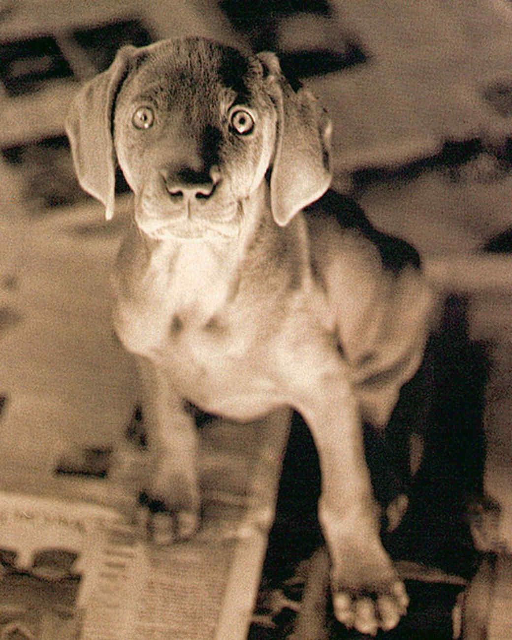 pe_training_puppy1.jpg
