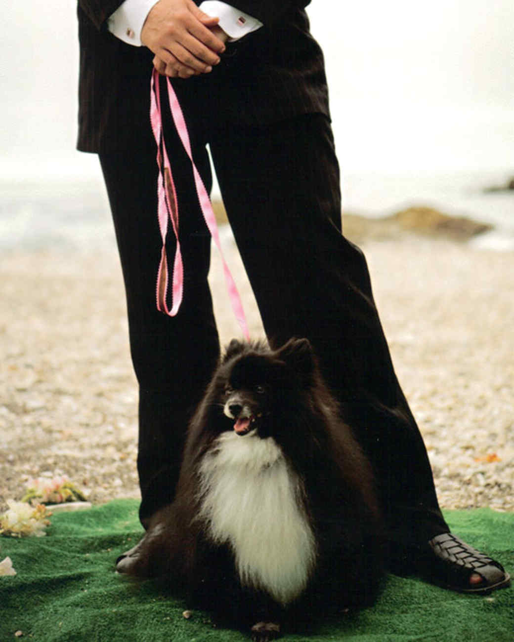 pets_wedding_91041.jpg