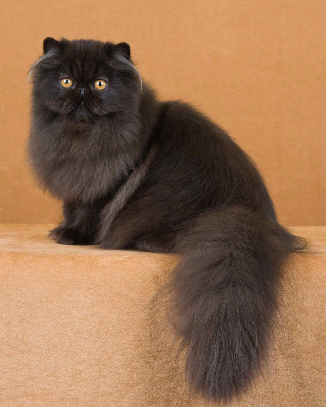 cat-breeds-kf07-074.jpg