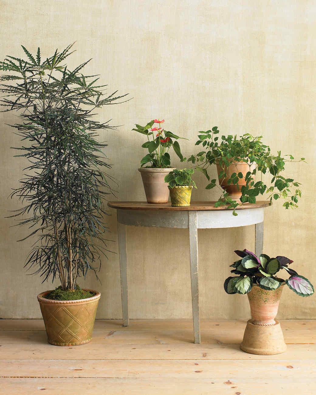 100 indoor plants no sun 10 plants you can u0027t kill no