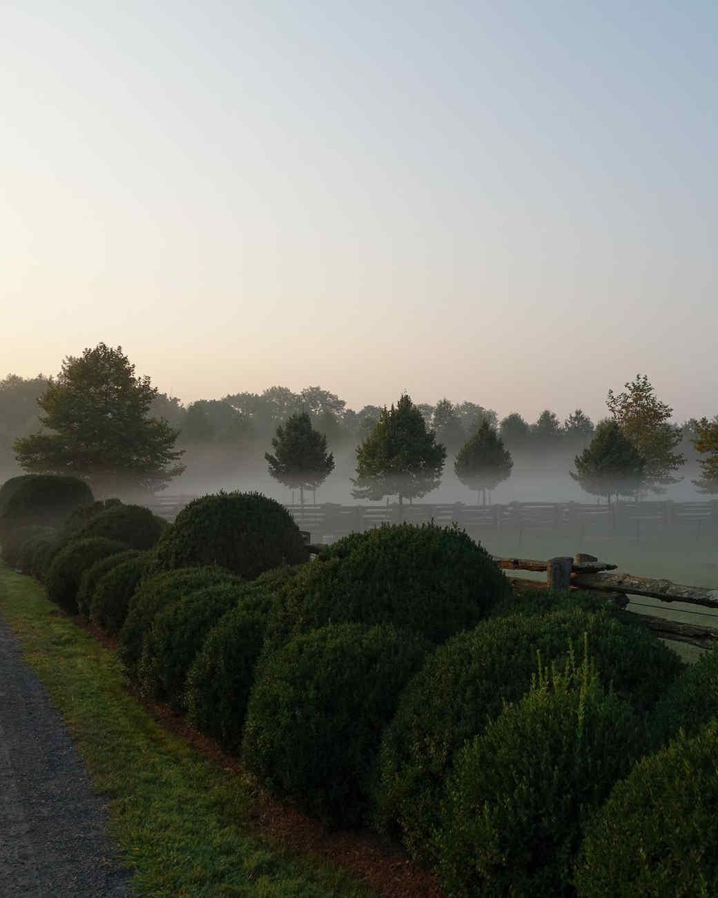 morning-fog-farm-02.jpg