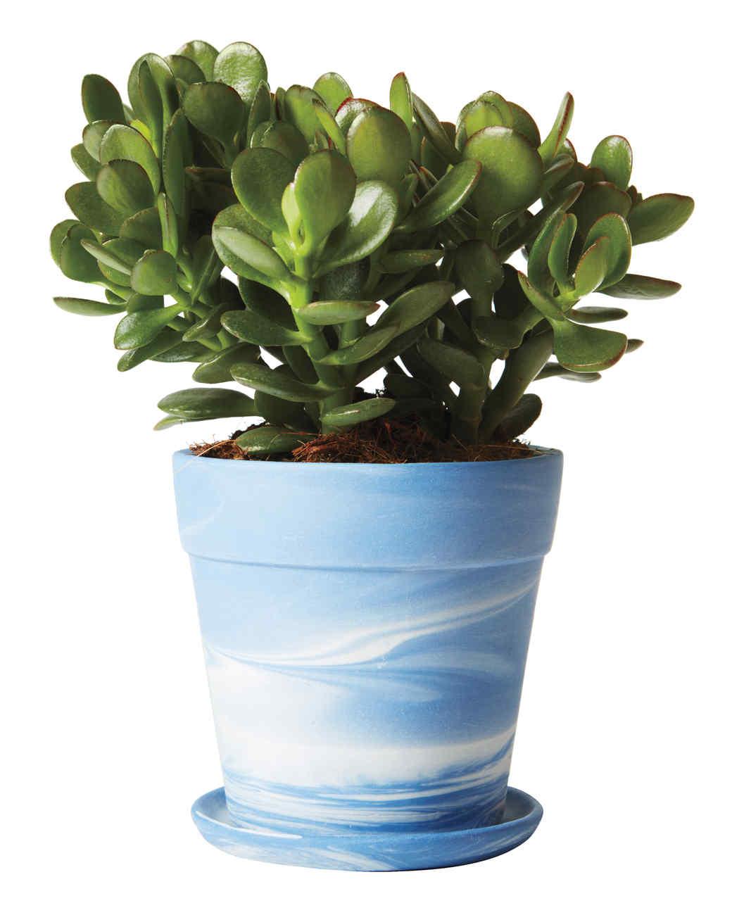 planter-219-d112494.jpg