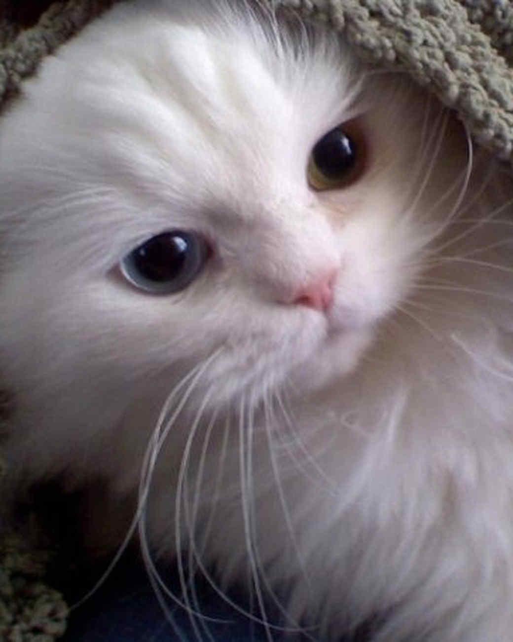 reader-pets-2013-04.jpg