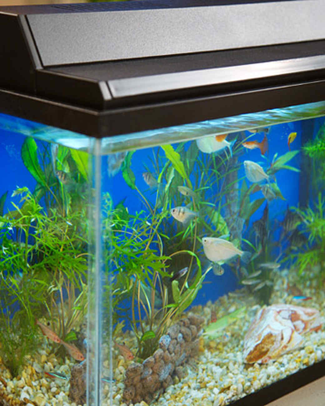 Freshwater fish marketing act - Setting Up A Fish Tank