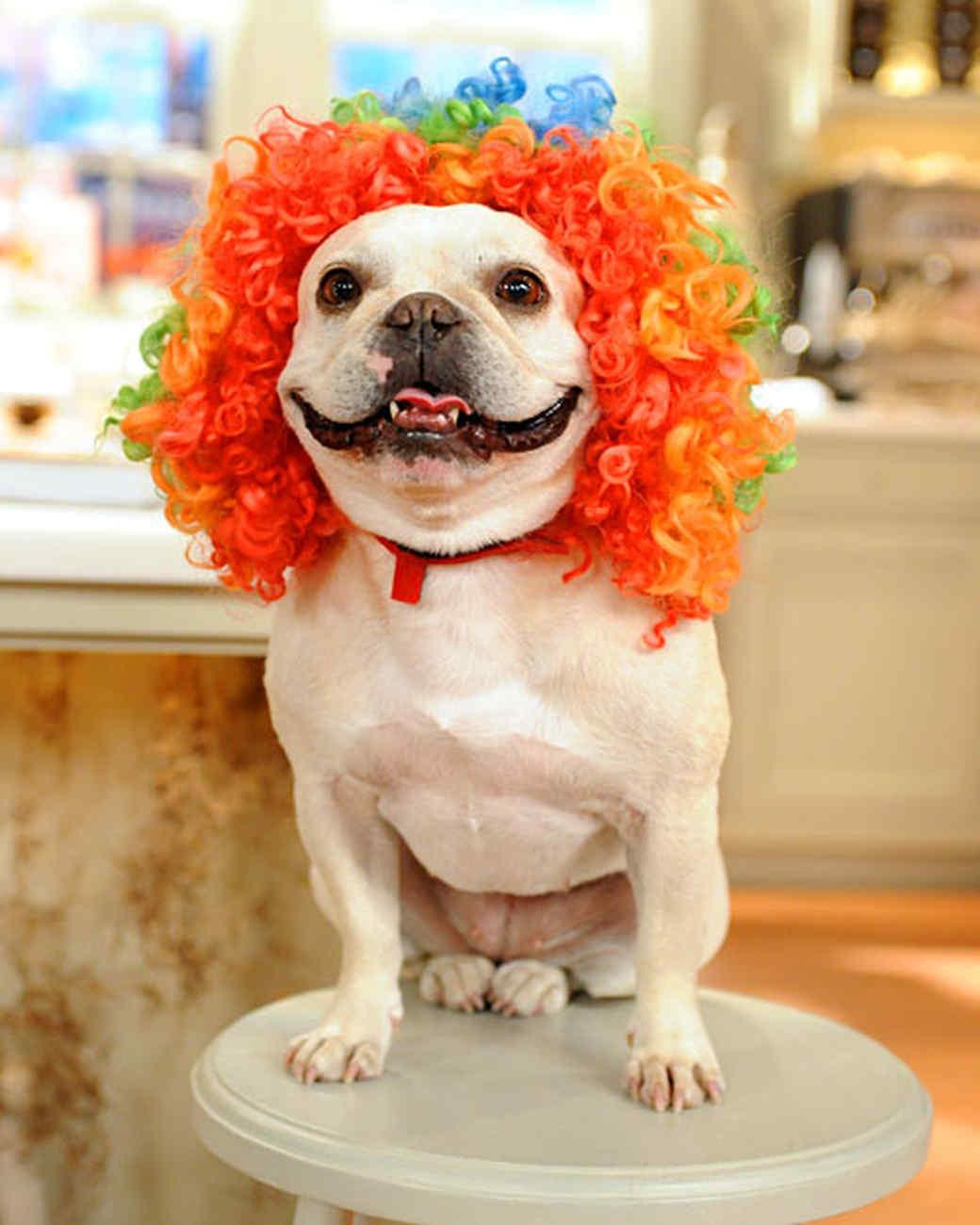 Felted Dog Wigs Amp Video Martha Stewart